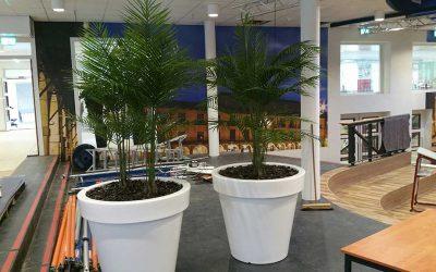 Kunst palmen Areca voor Canisius College Nijmegen