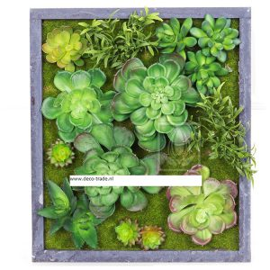 Succulentenmix Deco Trade