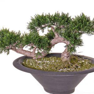 Kunstboom Bonsai ceder Deco Trade