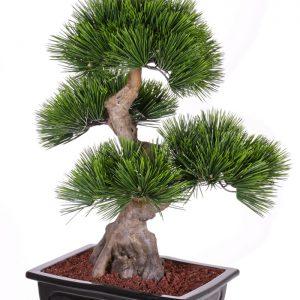 Kunstboom Bonsai Pinus mugo (Bergden) Deco Trade