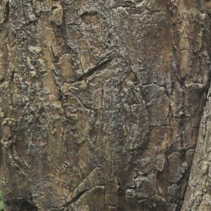 Kunst Ficus Giant Deco Trade