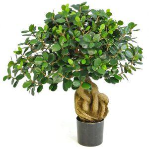 Kunst Ficus Microcarpa Bonsai Deco Trade