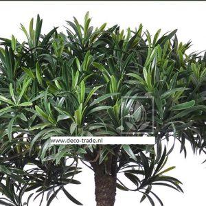 Deco Trade Podocarpus
